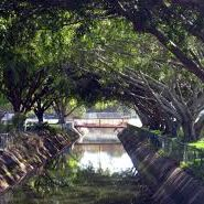 Enoggera Creek: A pulse<br /> of Brisbane life